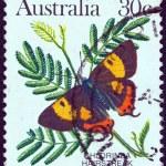 AUSTRALIA - CIRCA 1981: A stamp printed in Australia shows a Chlorinda hairstreak butterfly, circa 1981. — Stock Photo