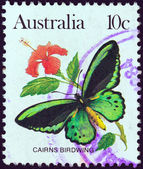 AUSTRALIA - CIRCA 1981: A stamp printed in Australia shows a Cairns birdwing butterfly, circa 1981. — Stock Photo