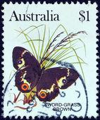 Australia - circa 1981: un sello impreso en australia muestra una espada-hierba marrón mariposa, circa 1981. — Foto de Stock