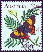 AUSTRALIA - CIRCA 1981: A stamp printed in Australia shows a Chlorinda hairstreak butterfly, circa 1981. — 图库照片