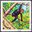"GUINEA - CIRCA 1975: A stamp printed in Guinea from the ""Wild Animals"" issue shows a Chimpanzee (Pan troglodytes), circa 1975. — Stock Photo"