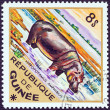 "GUINEA - CIRCA 1975: A stamp printed in Guinea from the ""Wild Animals"" issue shows a Hippopotamus (Hippopotamus amphibius), circa 1975. — Stock Photo"