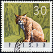 "POLAND - CIRCA 1965: A stamp printed in Poland from the ""Forest Animals"" issue shows a lynx, circa 1965. — Stock Photo"