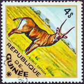 "GUINEA - CIRCA 1975: A stamp printed in Guinea from the ""Wild Animals"" issue shows a Defassa Waterbuck (Kobus defassa), circa 1975. — Stock Photo"