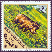 "GUINEA - CIRCA 1975: A stamp printed in Guinea from the ""Wild Animals"" issue shows a Desert Warthog (Phacochoerus aethiopicus), circa 1975. — Stock Photo"