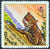 "GUINEA - CIRCA 1975: A stamp printed in Guinea from the ""Wild Animals"" issue shows a Leopard (Panthera pardus), circa 1975. — Stock Photo"