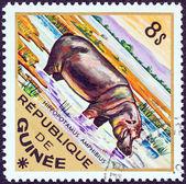 "GUINEA - CIRCA 1975: A stamp printed in Guinea from the ""Wild Animals"" issue shows a Hippopotamus (Hippopotamus amphibius), circa 1975. — Stockfoto"
