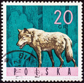 "POLAND - CIRCA 1965: A stamp printed in Poland from the ""Forest Animals"" issue shows a wolf, circa 1965. — Foto de Stock"