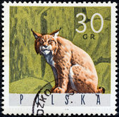 "POLAND - CIRCA 1965: A stamp printed in Poland from the ""Forest Animals"" issue shows a lynx, circa 1965. — Stockfoto"