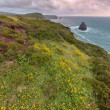 Cliffs of Boscastle, Cornwall, UK — Foto Stock #11217645