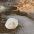 Cockleshell, sea — Stock Photo #11045377
