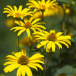 Stock Photo: Flower, yellow