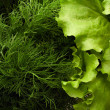 Green salad with dill - Stock Photo