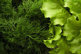 Green salad with dill — Stock Photo