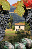 Vineyard in Chianti, Tuscany, Italy, famous landscape — Stock Photo