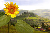 Vineyard in Chianti, Tuscany, Italy, famous landscape — Stock Photo