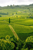 Vineyeard in Chianti, Toscany, Italy, famous landscape — Stock Photo
