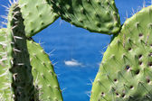 Cactus against blue ocean with alone yacht — Stock Photo
