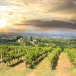 Vineyeard in Chianti, Tuscany, Italy — Stock Photo #11277342