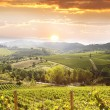 Vineyeard in Chianti, Tuscany, Italy — Stock Photo #11277444