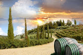 Vineyard in Chianti, Tuscany, Italy — Stock Photo