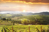 Vineyeard in Chianti, Tuscany, Italy — Stock Photo
