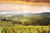 Vineyeard in chianti, toscana, italia — Foto de Stock