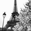 Eiffel Tower — Stock Photo #11280118
