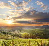 Chianti vineyard landscape in Tuscany, Italy — Stock Photo