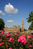 Big bena z róż, londyn, wielka brytania — Zdjęcie stockowe