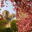 Paris, Notre Dame cathedral  in spring time, France — Stock Photo
