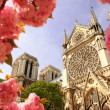 Paris, Notre Dame cathedral  in spring time, France — Zdjęcie stockowe