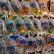 Bags of fishes for sale at The Goldfish Market. Hong Kong. — Stock Photo #10799990