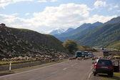 Sheep crossing Georgian military Highway. Georgia. — Stock Photo