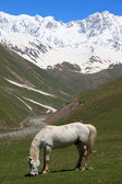 White Horse at alpine meadows at the foot of Mt. Shkhara. Ushguli Village. Upper Svaneti. Georgia. — Stock Photo