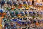 Bags of fishes for sale at The Goldfish Market. Hong Kong. — Stock Photo