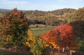 Autumn colours in countryside tablelands near Oberon. NSW. Australia. — Stock Photo