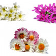 Sets of flowers isolated on white — Stock Photo