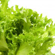 Stock Photo: Lettuce
