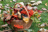 Autumn basket — Stock Photo