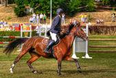 Punk pferd — Stockfoto
