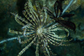 Reef hydroid — Stock Photo