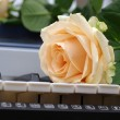 Single rose on a piano - Stock Photo