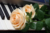 Roses on a piano keyboard — Stock Photo