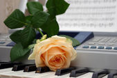 One rose on a piano — Stock Photo