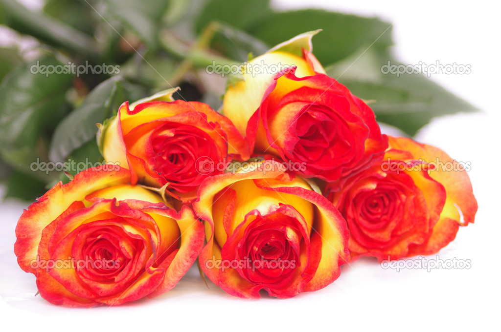 Five roses isolated on white  Stock Photo #11907048