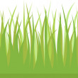 Stock Vector: Vector green grass