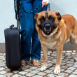 Traveling with dog — Stock Photo