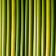 Stock Photo: Green stems