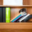 图库照片: Kitten sleeping on bookcase